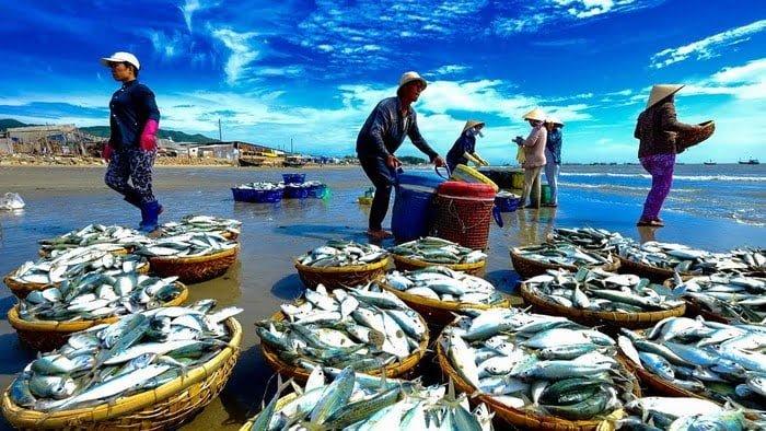 nghề-đánh-bắt-cá